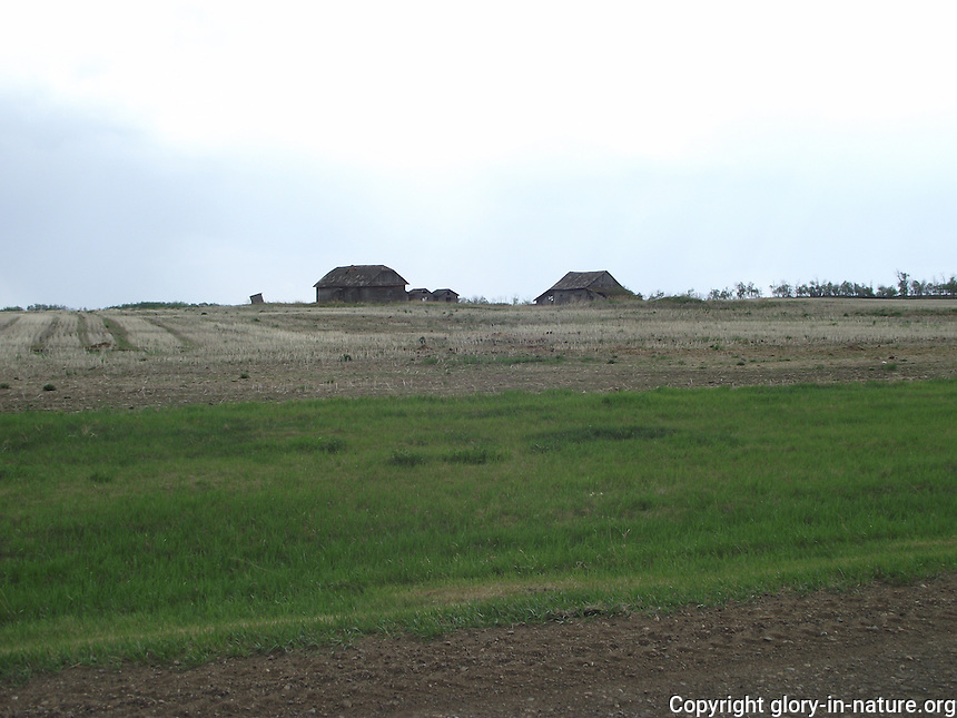 Old barns in the area of Smoky Lake, Alberta.