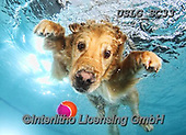 REALISTIC ANIMALS, REALISTISCHE TIERE, ANIMALES REALISTICOS, dogs, paintings+++++SethC_Frisco_IMG_2067rev3,USLGSC33,#A#, EVERYDAY ,underwater dogs,photos,fotos ,Seth