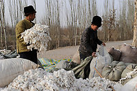 CHINA, province Xinjiang, uighur village Jin Erek near city Kashgar where uyghur people are living, farmer sell harvested cotton to dealer / CHINA Provinz Xinjiang, Jin Erek ein uigurisches Dorf bei Stadt Kashgar, hier lebt das Turkvolk der Uiguren, Bauern verkaufen Baumwolle an Haendler