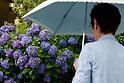 Annual Rainy Season Tsuyu starts early in Japan