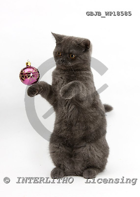 Kim, CHRISTMAS ANIMALS, photos, GBJBWP18585,#XA# stickers