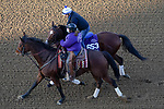 November 5, 2020: C Z Rocket, trained by trainer Peter Miller, exercises in preparation for the Breeders' Cup Dirt Mile at Keeneland Racetrack in Lexington, Kentucky on November 5, 2020. John Voorhees/Eclipse Sportswire/Breeders Cup/CSM