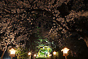 Cherry blossom in full bloom at Hirosaki Park in Aomori