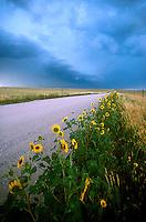 Flowers along roadway<br />