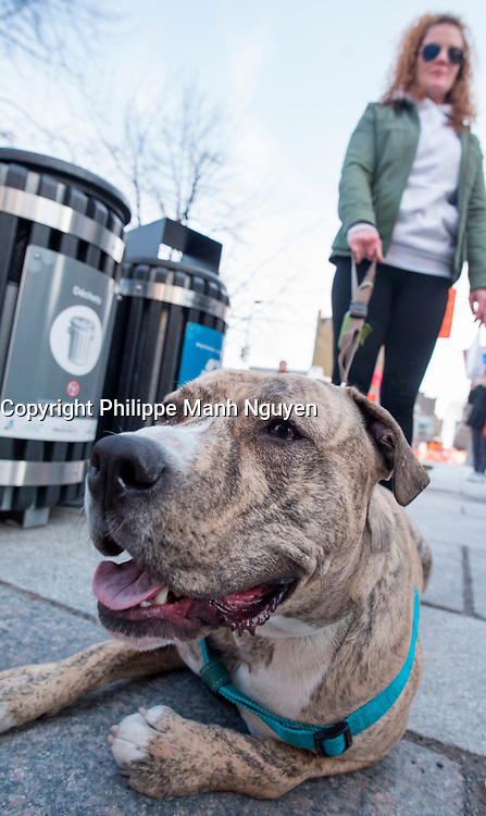Demonstration in front of Montreal City Hall against the proposed ban on Pitbull dogs,  April 24, 2017.<br /> <br />  PHOTO  :   Agence Quebec Presse