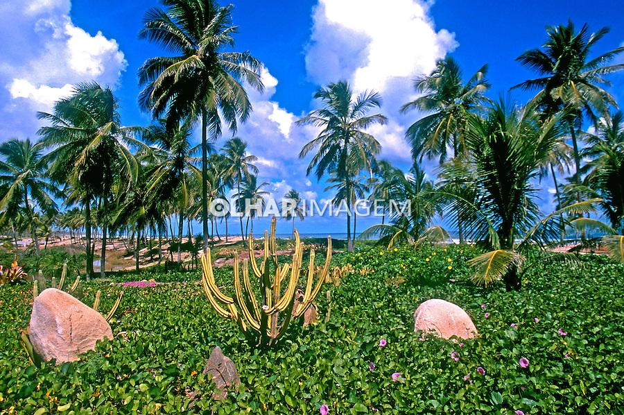 Vegetaçao de restinga, Costa do Sauípe. Bahia.  Foto de Juca Martins.