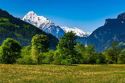 Oesterreich, Tirol, Fruehling im Zillertal, Blumenwiese voller Loewenzahn, schneebedeckte Gipfel der Zillertaler Alpen mit Ahornspitz (2.976 m)   Austria, Tyrol, springtime at Ziller Valley, flower meadow full of dandelions, Ziller-Valley Alps with Ahornspitz mountain (2.976 m)