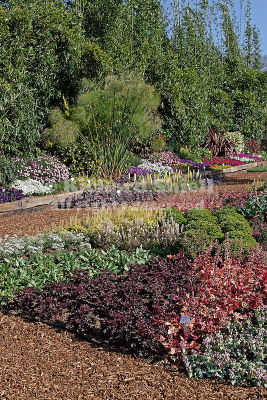 DEMONSTRATION GARDEN AT PROVEN WINNERS IN PACK TRIALS