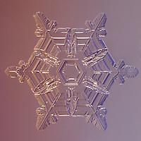 Snowflake Procyon - Stellar Plate