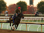 Ollie'S Candy, trained by trainer John W. Sadler, exercises in preparation for the Breeders' Cup Distaff at Keeneland Racetrack in Lexington, Kentucky on October 31, 2020.