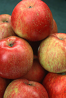 """Apple Fuji . Heirloom apple variety. Fuji was developed at Tohuku Research Station in Morioka, Japan.  First brought to light from New Zealand in the 1980s.  It's an aromatic and juicy apple, with a spicy, crisp sweetness.  An exceptional eating apple for those with a """"sweet tooth."""""""