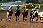 """ARCADIA, CA  SEP 26: The field of the Awesome Again (Grade l) """"Win and You're In Breeders' Cup Classic Division"""" makes the turn for the wire.  (Photo by Casey Phillips/Eclipse Sportswire/CSM."""