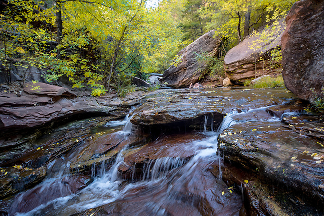 Fall colors have arrived at Zion National Park's North Creek