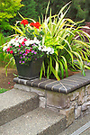 Detail of a container of colorful summer annuals atop a capped stone wall, backed by a variegated New Zealand flax in this small suburban backyard garden east of Seattle. Design by Sander Groves landscapes, Inc.