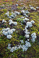 Unidentified plants with white leaves create a  natural oval shape at Bean Hollow State Beach.