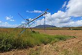 Pivot d'irrigation, champ de maïs (exploitation de Christophe Courtot), Pouembout