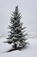 Snow, Dubois, Wyoming