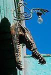 tête de crocodile suspendu au dessus d'une maison nubienne. Au temps des pharaons, le crocodile - ?Olom? en nubien, régnait en maître sur le Nil. Il était à la fois craint et adoré. des anciens Égyptiens. Le dieu Sobek avait son apparence et il était vénéré dans le temple de Kom Ombo et sur le lac Quaroun dans l'oasis de Fayoum.