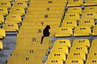 BOGOTA - COLOMBIA, 17-AGOSTO-2017: A puerta cerrada y sin público por culpa de los violentos , se jugó el partido de La Liga Águila en el estadio Campín entre los equipos Millonarios y Jaguares FC ,un gato fué lo único que apareció  por unos momentos en una de las tribunas del estadio. .Millonarios  y Jaguares FC en partido por la fecha 8 de la Liga Águila II 2017 jugado en el estadio El Campín de la ciudad de  Bogotá. / Millonarios  and Jaguares FC in match for the date 8 of the Aguila League II 2017 played at El Campin stadium in Bogota city. Photo: Vizzorimage / Felipe Caicedo / Staff