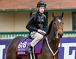 DEL MAR, CA - NOVEMBER 01: Marsha, owned by Elite Racing Club and trained by Sir Mark Prescott, exercises in preparation for Breeders' Cup Turf Sprint at Del Mar Thoroughbred Club on November 1, 2017 in Del Mar, California. (Photo by Kazushi Ishida/Eclipse Sportswire/Breeders Cup)