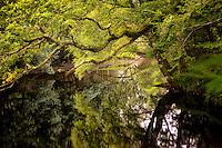 Calm placid waters of Gearhmeen River, Killarney National Park, Ireland