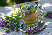 Braunelle, Braunelle-Tee, Tee, Kräutertee, Heiltee, Blütentee, Tee aus Braunelleblüten, Gemeine Braunelle, Gewöhnliche Braunelle, Kleine Braunelle, Kleine Brunelle, Prunella vulgaris, Self Heal, common self-heal, heal-all, tea, herbal tea, herb tea, La Brunelle commune