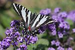 Butterflies_BT_FB