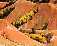 The red earth of the Gros Ventre Range blends with the brilliant yellow of aspens at their peak.<br /> Just east of Grand Teton National Park, Wyoming.