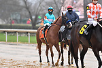 February 27, 2021: #7, Spielberg in the post parade for the Southwest Stakes (Grade 3) at Oaklawn Park in Hot Springs, Arkansas. Ted McClenning/Eclipse Sportswire/CSM