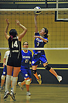 14 October 2012: Yeshiva University Maccabee setter Shana Wolfstein, a Sophomore from Burlington, VT, in action against the St. Joseph's Lady Bears at Culinary Institute of America in Hyde Park, NY. The Lady Bears defeated the Maccabees 3-0 in NCAA women's volleyball play. Mandatory Credit: Ed Wolfstein Photo