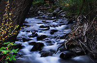 """""""EAGLE CREEK""""<br /> <br /> Slow motion water cascading down Eagle Creek in the Gallatin National Forest near Jardine, Montana 24 x 36 signed, original, gallery wrapped wrapped canvas $2,500. Check for availability"""