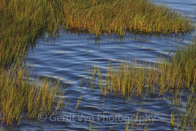 Mississippi Delta salt marsh. Plaquemines Parish, Louisiana. July 2010.