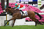 SHA TIN,HONG KONG-APRIL 24: Ambitious Champion,# 6,ridden by Chad Schofield,wins the Queen Mother Memorial Cup (Local G3) at Sha Tin Racecourse on April 24,2016 in Sha Tin,New Territories,Hong Kong (Photo by Kaz Ishida/Eclipse Sportswire/Getty Images)