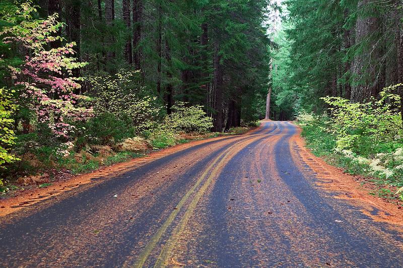 Road into Natural Bridge Recreation Area, Rogue River, Oregon