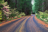 Road into Natural Bridge Recreation Area, Rogue River, Oregon