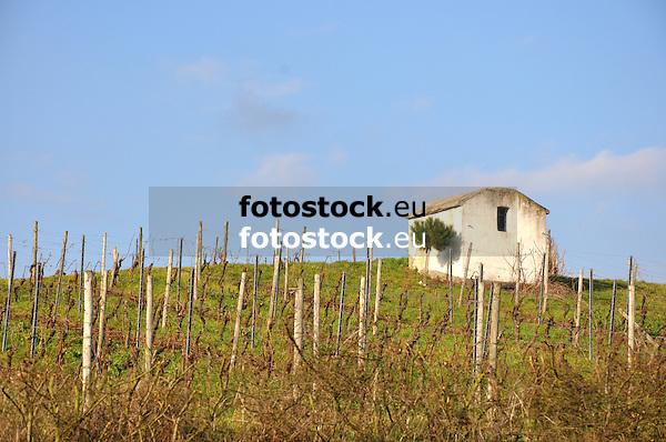 Weinberghaus am Biblischen Weinpfad bei Partenheim