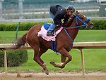 April 24, 2014 Sugar Shock works with jockey Calvin Borel at Churchill Downs.  She is trained by Doug Anderson and owned by On Cloud Nine LLC.  Her last victory was the Fantasy Stakes at Oaklawn Park. Calvin Borel will ride her in the Kentucky Oaks