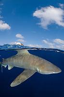 oceanic whitetip shark, Carcharhinus longimanus, Columbus Point, Cat Island, Bahamas, Caribbean Sea, Atlantic Ocean