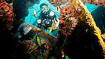 Diver, Porkfish and Black Margate on the M.V. Benwood, Key Largo, Florida