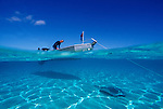 Moorea, French Polynesia; a scuba diver prepares for a dive at Sting Ray City, as a Tahitian Sting Ray swims under the boat , Copyright © Matthew Meier, matthewmeierphoto.com All Rights Reserved