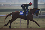 DUBAI,UNITED ARAB EMIRATES-MARCH 23: Triple Nine,trained by Young Kawn Kim,exercises in preparation for the Godolphin Mile at Meydan Racecourse on March 23,2017 in Dubai,United Arab Emirates (Photo by Kaz Ishida/Eclipse Sportswire/Getty Images)