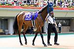 FUCHU,JAPAN-JUN 6: Schnell Meister,the 2021 NHK Mile Cup (Gl) winner,walks at the padock before the Yasuda Kinen at Tokyo Racecourse on June 6,2021 in Fuchu,Tokyo,Japan. Kaz Ishida/Eclipse Sportswire/CSM
