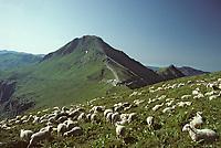Europe/France/Auvergne/15/Cantal/Parc Naturel Régional des Volcans: Le massif du Puy Mary (1787 mètres) et Le Pas de Peyrol (1582 mètres)