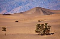 Velvet Sands