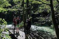 Teich mit Schwarzerlen  im Nationalpark Jasmund auf der Insel Rügen, Mecklenburg-Vorpommern, Deutschland