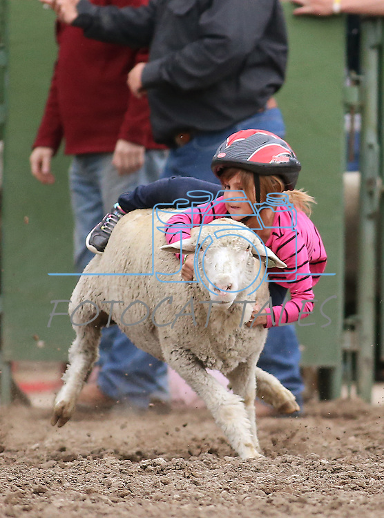 Hailey Meznarich, 7, competes in the mutton busting event at the Smackdown at Fuji Park in Carson City, Nev., on Friday, June 5, 2015. <br /> Photo by Cathleen Allison/Nevada Photo Source