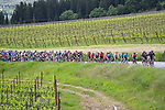 The peloton pass through the vineyards during Stage 12 the Tappa Bartali of the 2021 Giro d'Italia, running 212km from Siena to Bagno di Romagna, Italy. 20th May 2021.  <br /> Picture: LaPresse/Fabio Ferrari | Cyclefile<br /> <br /> All photos usage must carry mandatory copyright credit (© Cyclefile | LaPresse/Fabio Ferrari)