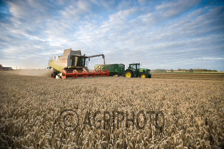 Harvesting Wheat at F C & H S Allen,Market Deeping,.Lincolnshire..Picture Tim Scrivener date taken 14th August  2011 .mobile 07850 303986 e-mail tim@agriphoto.com.....covering Agriculture in The United Kingdom.....