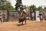 True Grit Bull Camp 2014 - 5.25.2014 - Day 2