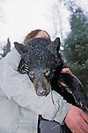 Black Bear Yearling